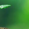 Maskagrit και περιβάλλον